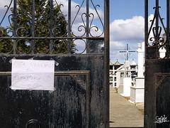 Esta venenado el cementerio - Faramontanos de ...
