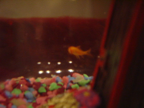 The fish.