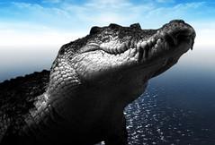 @Rantz's Crocodile