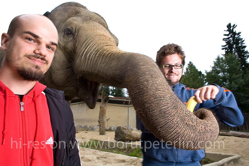 slon in sadež foto borut peterlin 20080916_7363