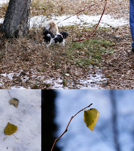 leaf trip (by Leaca's Philosophy)