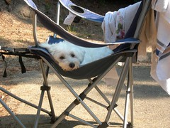 Lucy Camping
