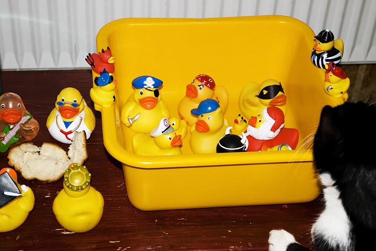 Duckies and Moritz