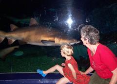 Ocean World 13 sharks