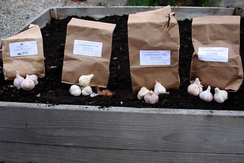 Garlic Bags