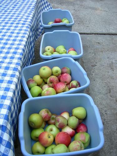 Pre-cider apples