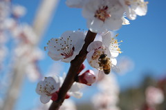 Primavera... gustosa