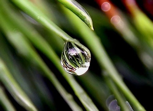 Needles in a Raindrop