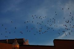flight of birds no. 7