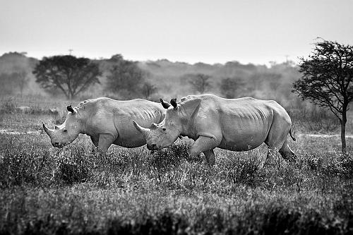 sized_Botswana_0127a3_BW