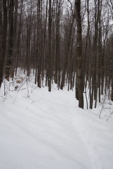 Snowy Trail - East Meadow Trail - ASP