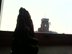 gajah melamun