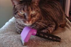 Kosmo & The Furminator