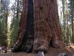 General Sherman Tree - la base