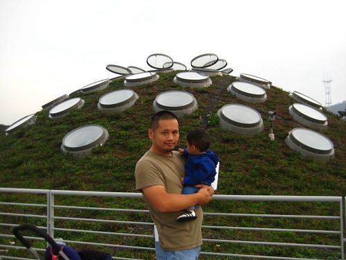 then we took the elevator up to see the living roof, which was covered in native Californian plants