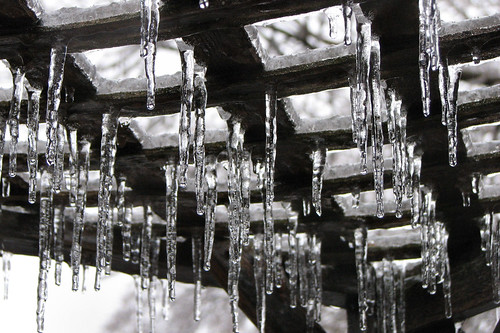 Icicles on our trellis