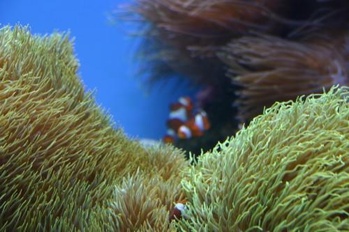 Coral at the aquarium