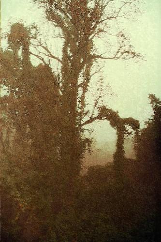 Unto the Mist