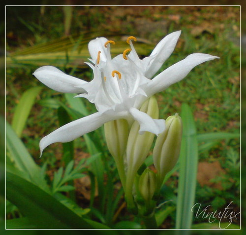 Wild-Lilly02