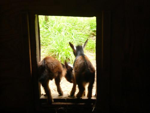 Kids in the doorway