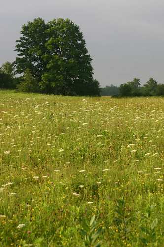 the middle field before mowing