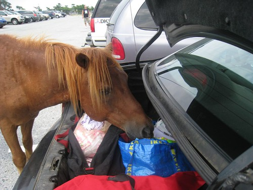 Assateague Pony helping pick an outfit for Amelia