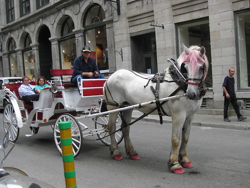 A pink-maned horse pulls a buggy down Rue St. Paul, Old Montreal