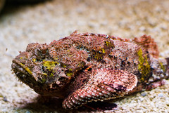 Stonefish, highly poisonous. They seem to spend their time just hanging out and looking Scarey
