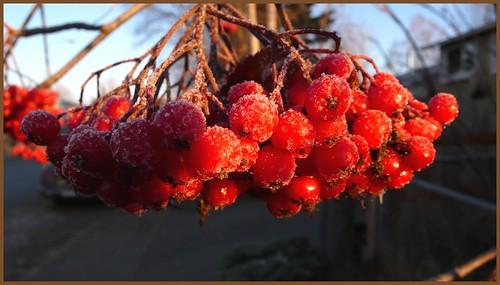 Frozen berries across the street.