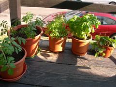 June 24: Garden
