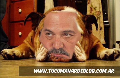 rusobulldog