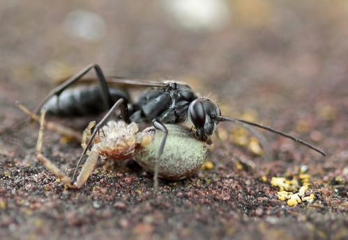 Wasp 1, spider 0