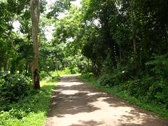 Sangolda village road (Goa, India)