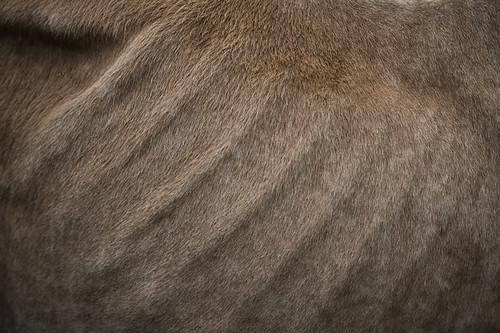 Textura do Vale do Jequitinhonha