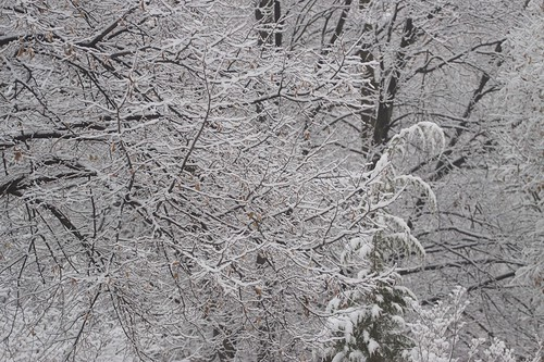 The first snowfall of 2008
