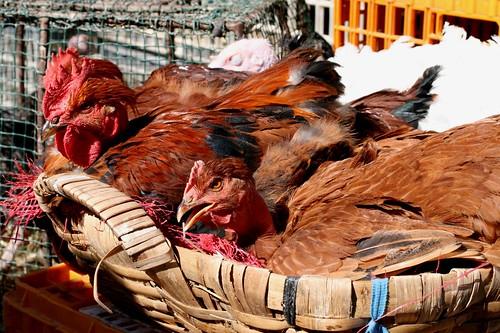 Poultry for sale at Barcelos market
