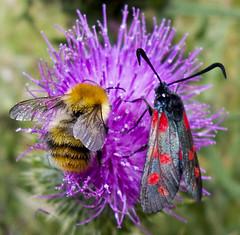 I like bees. I like burnets. I do not like M366.
