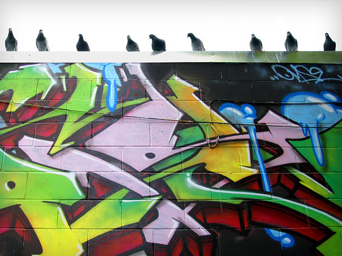 Birds & graffiti