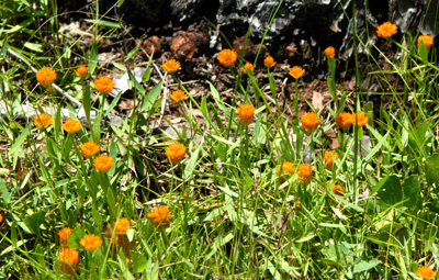 DSC_0149ABC-OrangeFlower-2