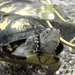 Turtle -- DSCN4470
