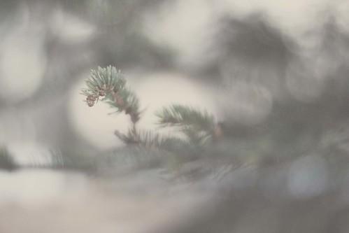 haze (by Leaca's Philosophy)