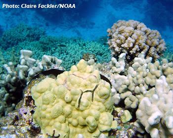 Claire Fackler / NOAA