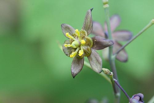 wildflowers11