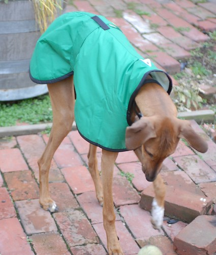 Tawzalt in her coat