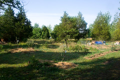 Forest garden and orchard