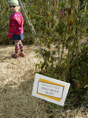 About to begin the pole bean maze