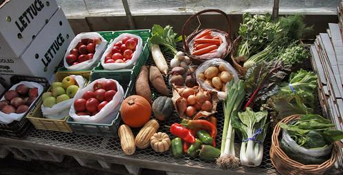 distribution and five apple varieties