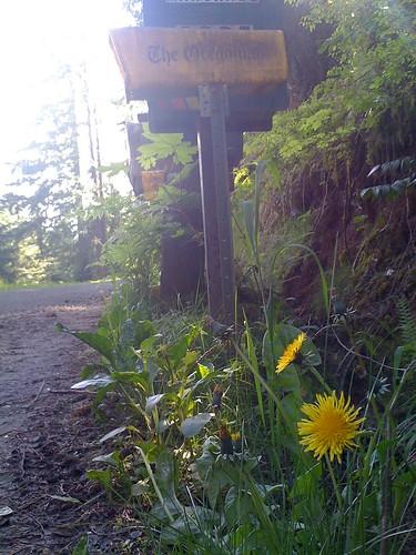 Yellow Flowers and Yellow Mailbox