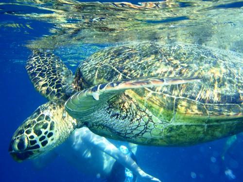 I love underwater cameras