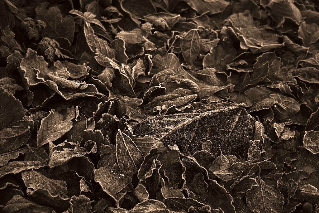 Sepia Leaves, Auto Adjust Colours